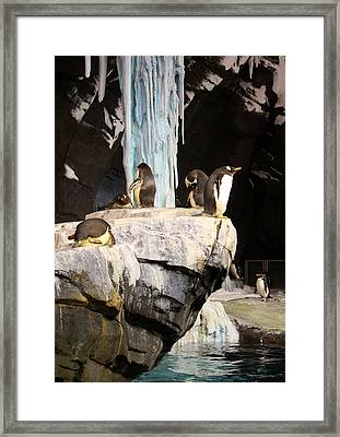 Seaworld Penguins Framed Print by David Nicholls