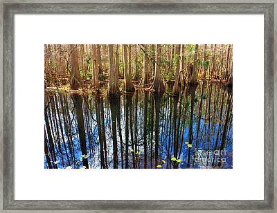 Sebring Cypress Swamp Reflection Framed Print by Carol Groenen