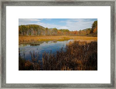 Secluded Adirondack Pond Framed Print by David Patterson