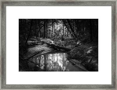 Secluded Creek Framed Print