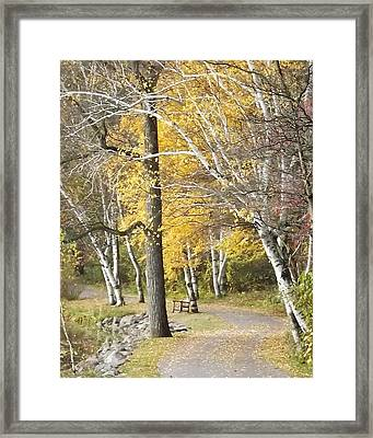 Secluded Lake Road Framed Print