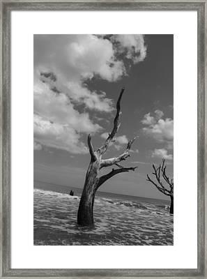 Second Glance Framed Print by Steven  Taylor