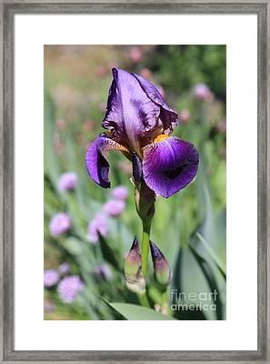 Second Iris Framed Print