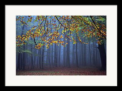 Fall Colours Framed Prints