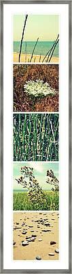 Secret Beach Ll Framed Print by Michelle Calkins