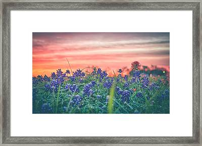 Secret Bluebonnets Framed Print