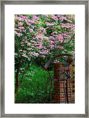 Secret Hiding Place...... Framed Print by Tanya Tanski