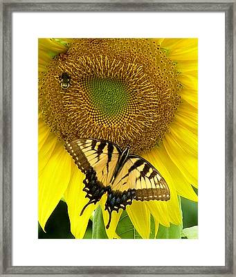 Secret Lives Of Sunflowers Framed Print
