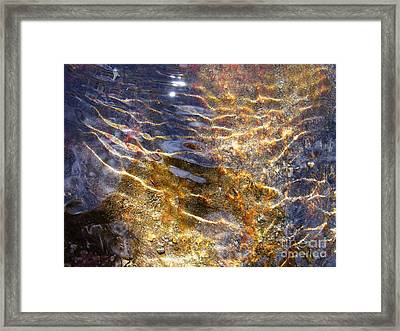 Secret Of Life Framed Print