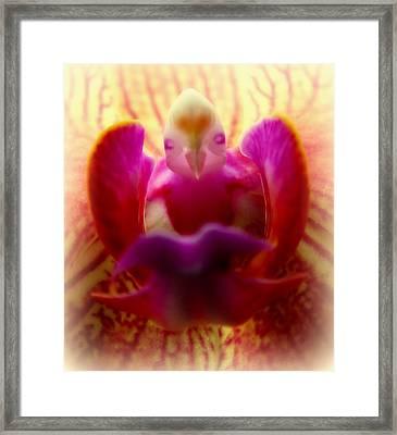 Secret Of The Orchids Framed Print