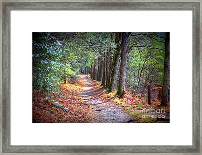 Secret Pathway 1 Framed Print