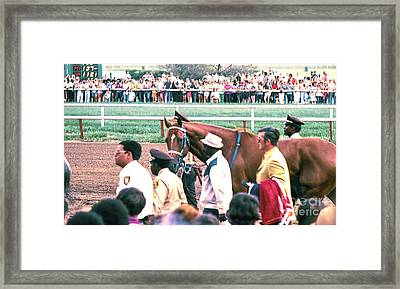 Secretariat Race Horse Looking At Me Before He Won A Big Race At Arlington Race Track In 1973.  Framed Print