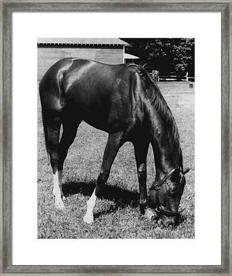 Secretariat Vintage Horse Racing #03 Framed Print by Retro Images Archive