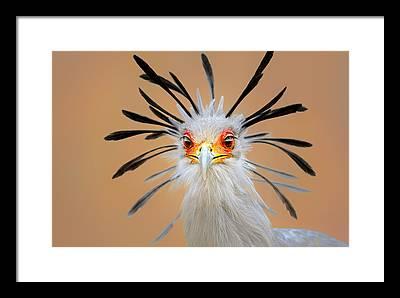 Birds Eye View Framed Prints
