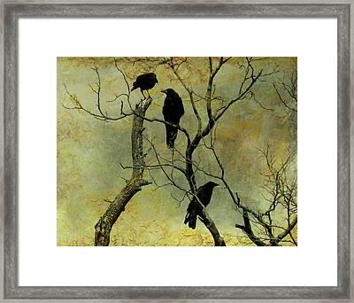Secretive Crows Framed Print