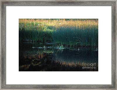 Sedges At Sunset Framed Print