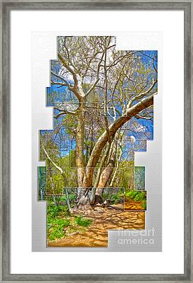 Sedona Arizona Big Tree Framed Print by Gregory Dyer