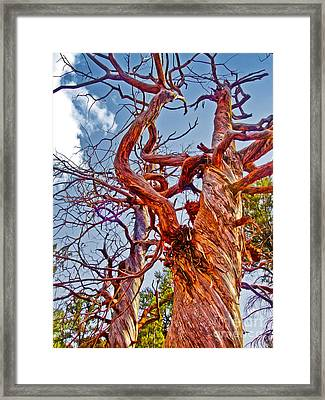 Sedona Arizona Ghost Tree Framed Print by Gregory Dyer