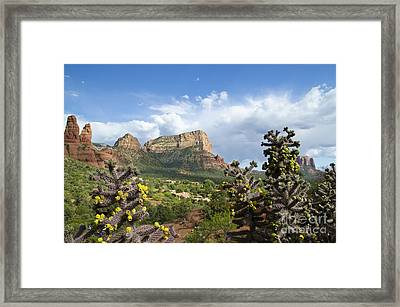 Sedona Cactus In Bloom Framed Print by Maria Janicki