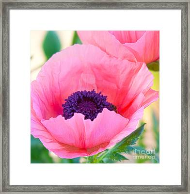 Seductive Poppy Framed Print