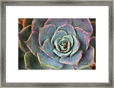 Sedum With Pink Edges Framed Print