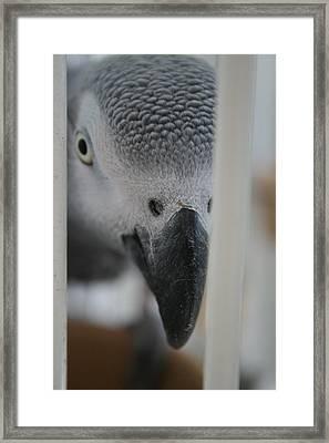 I See You Framed Print by Paulette Maffucci