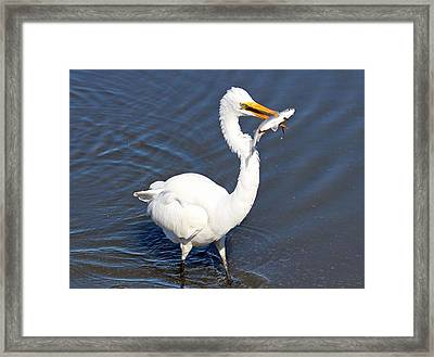See My Catch Framed Print by Cynthia Guinn