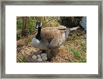Framed Print featuring the photograph See My Eggs by Elizabeth Winter