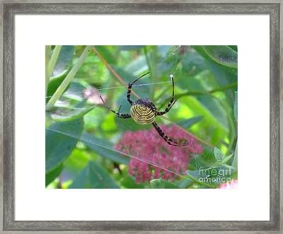 See My Web Framed Print by Deborah DeLaBarre