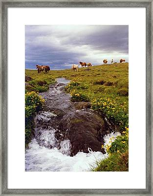 Framed Print featuring the photograph See The Pretty Horses by Debra Kaye McKrill