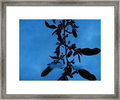 See The Sky About To Rain Framed Print by Nicholas Novello