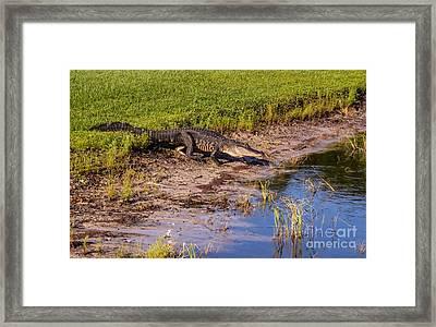 See You Later Alligator Framed Print