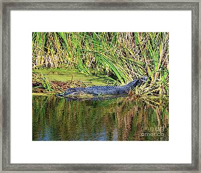 See You Later Framed Print by Mel Steinhauer