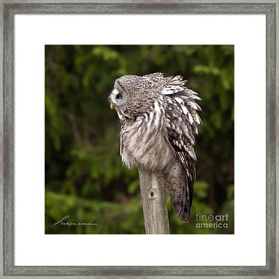 See You Framed Print by Torbjorn Swenelius