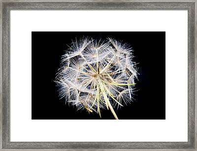 Seed Head Framed Print