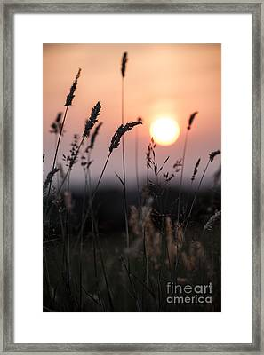 Seed Heads At Sunset Framed Print by Jan Bickerton