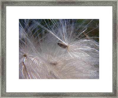 Framed Print featuring the photograph Seed Of Life by Agnieszka Ledwon