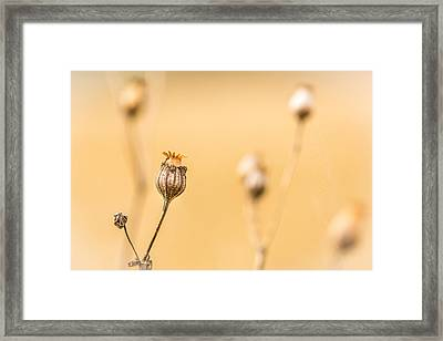 Framed Print featuring the photograph Seed Pod. by Gary Gillette