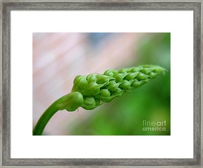 Seed Pod Framed Print by Patti Whitten