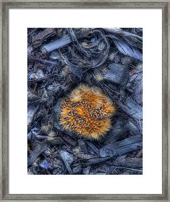 Seed Pod Framed Print by Tom Mc Nemar