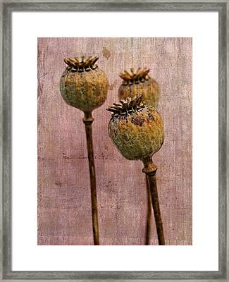 Seed Pods - An Artistic Display Framed Print