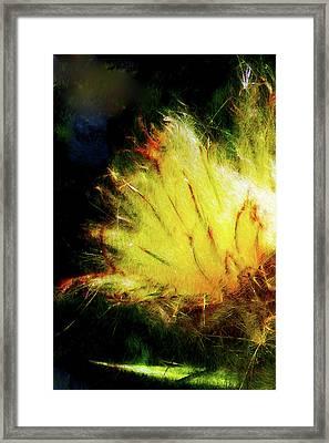 Seedburst Framed Print