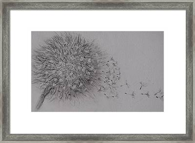 Seedhead Framed Print by Anne Parker