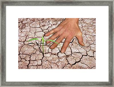 Seedling And Hand On Cracked Earth Framed Print by Victor De Schwanberg