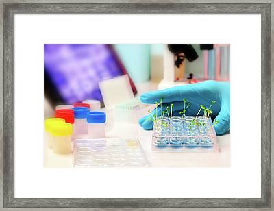 Seedlings In Laboratory Framed Print