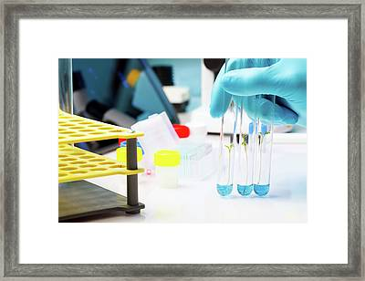 Seedlings Inside Test Tubes Framed Print