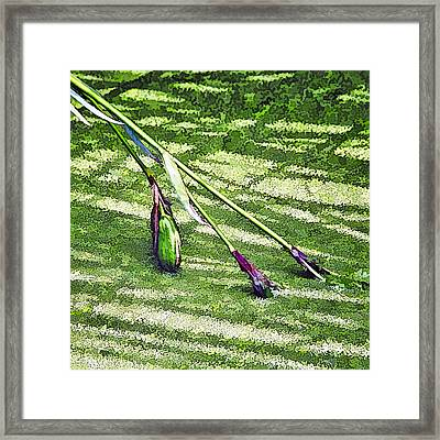 Seedpods In Pond Moss Framed Print