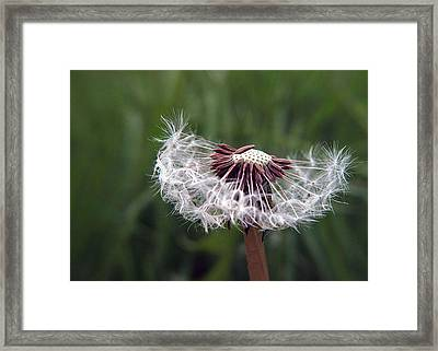 Seeds And Stems Framed Print