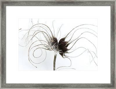 Seeds Framed Print by Anne Gilbert