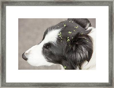Seeds Evolved To Stick To Animal Fur Framed Print by Ashley Cooper
